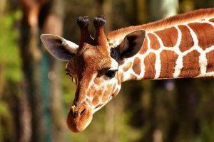 גן החיות באמסטרדם הולנד