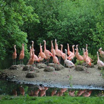 גן חיות בהולנד